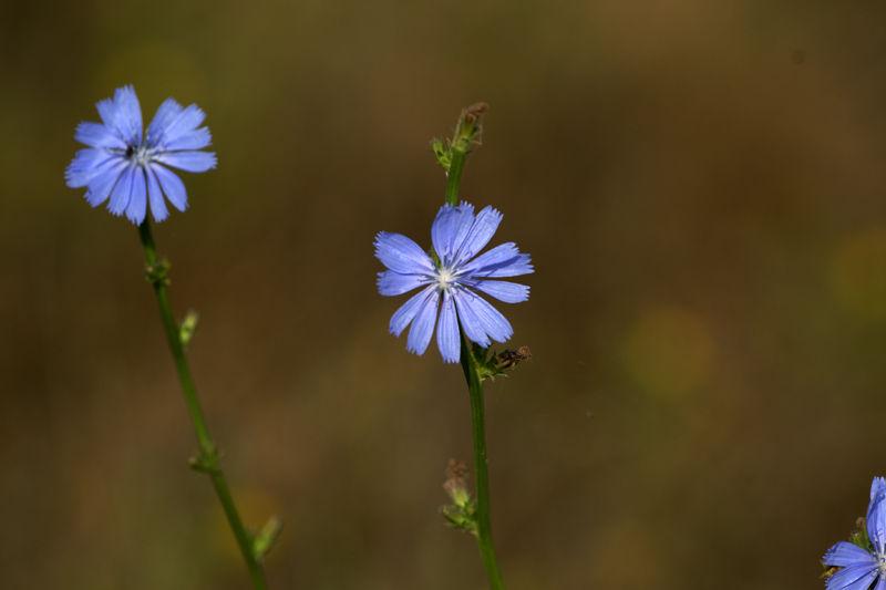 Wetland's flower