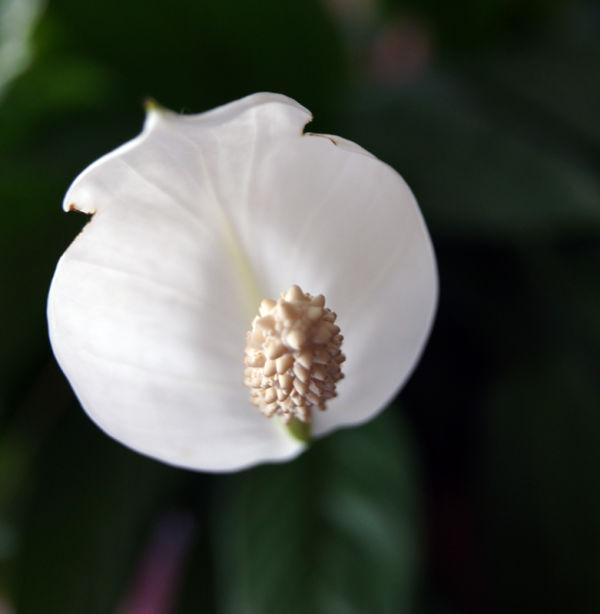 Tub Flower