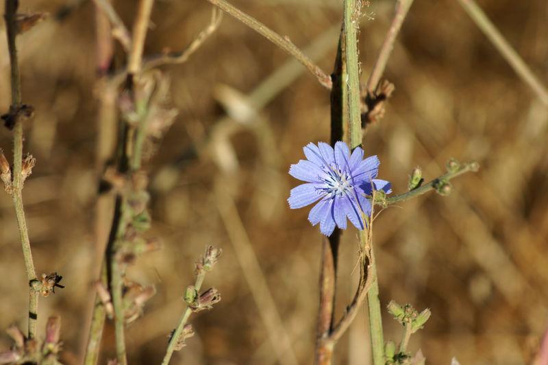 Among the weeds