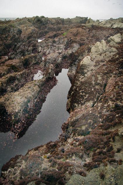 Tide Pool 2