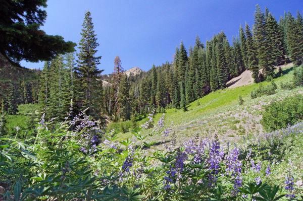 Mt. Lassen NP V