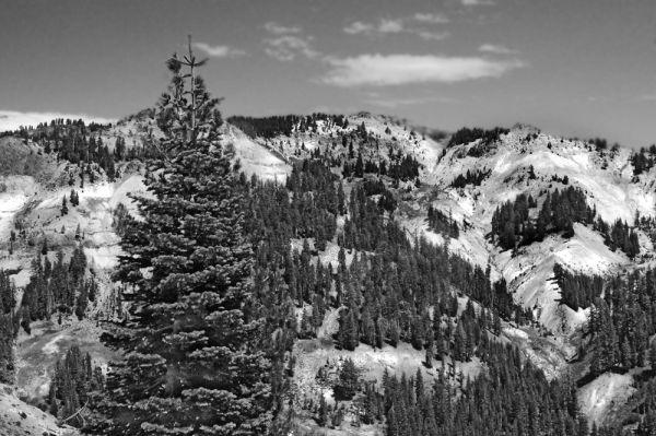 Mt. Lassen NP VII