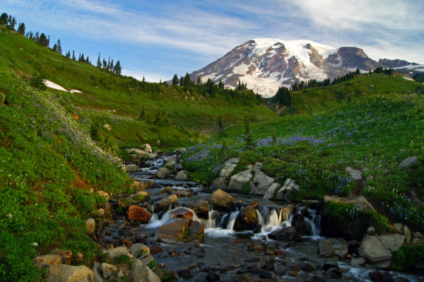 Mt. Rainier II