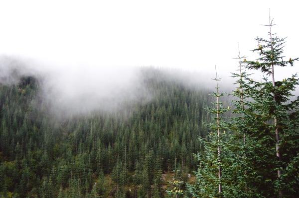 Mount St. Helens III