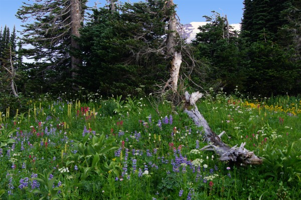 The Last of Mount Rainier