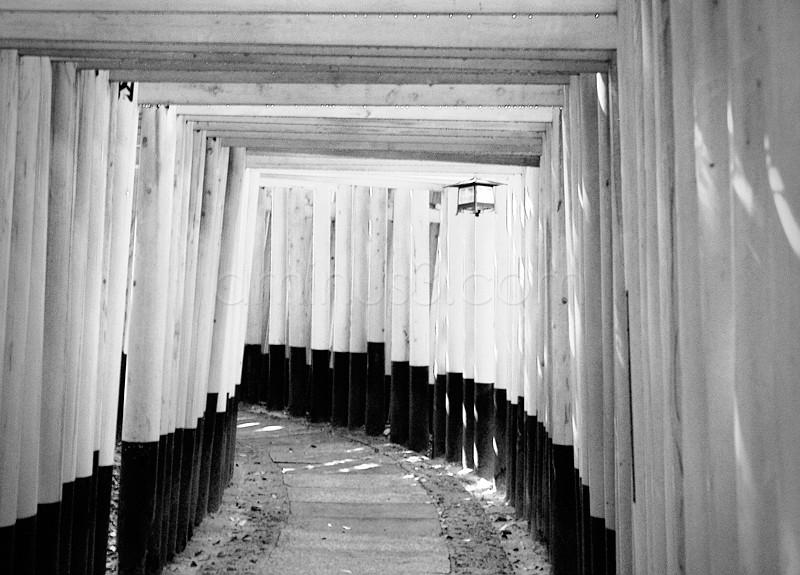 Toriis at Fushimi Inari Shrine Japan