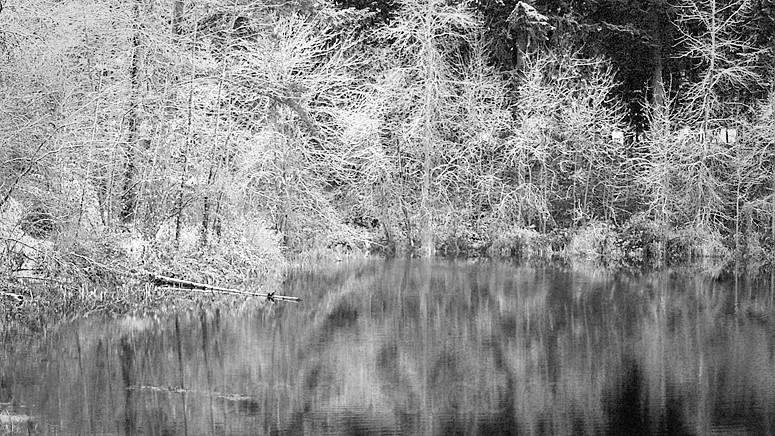 Trees encased in snow on the banks of a lake
