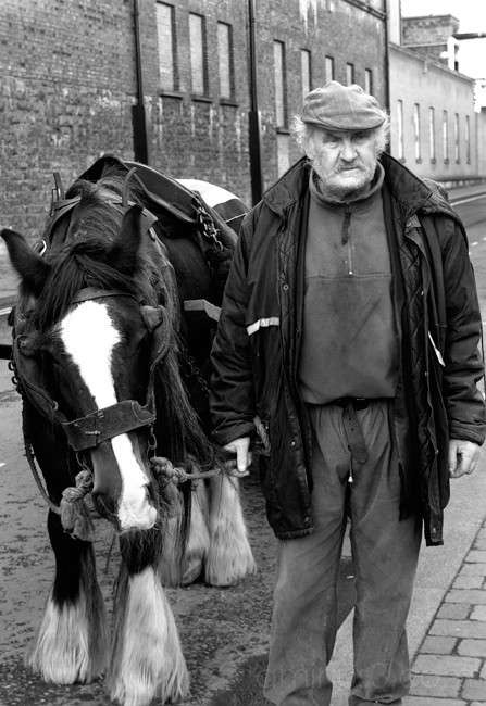 Irish Panhandler with Horse
