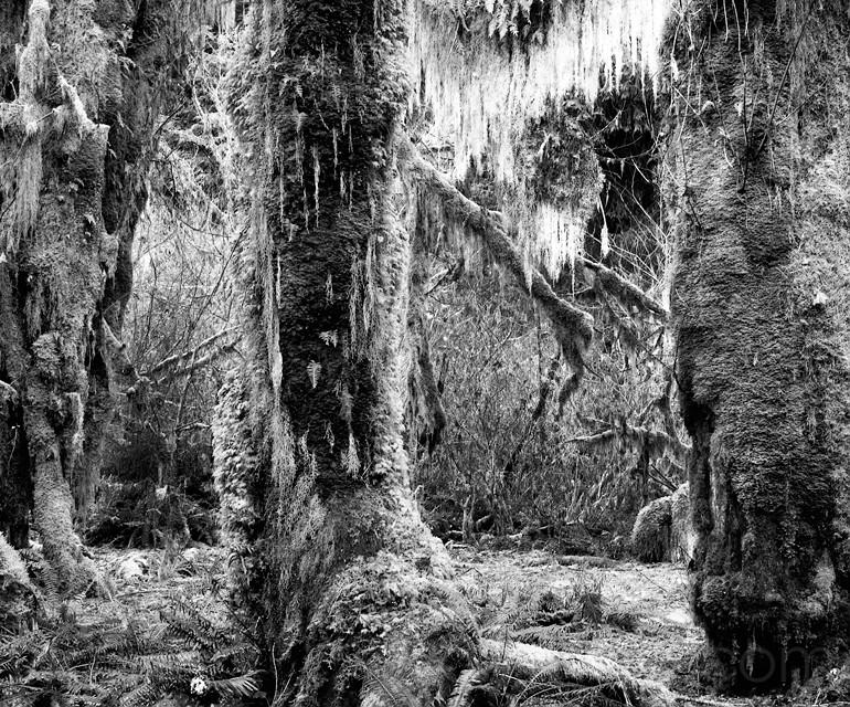 Wild Rain Forest