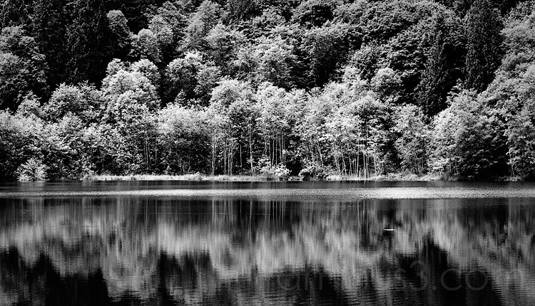 Trees reflected on water