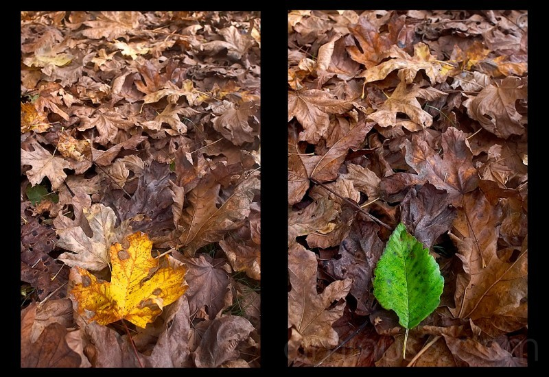Leaves Diptych