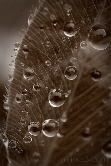 Droplets on Leaf
