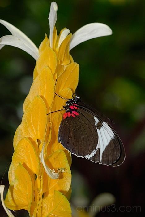 Sera on Mellow Yellow Plant