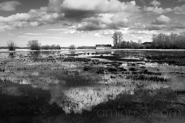 Nisqually Wetland