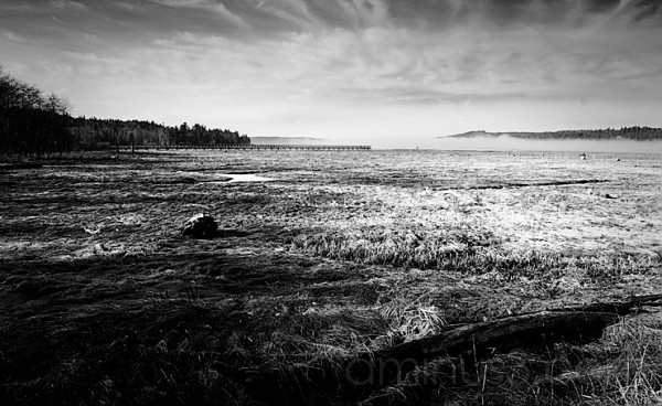 Theler Wetland