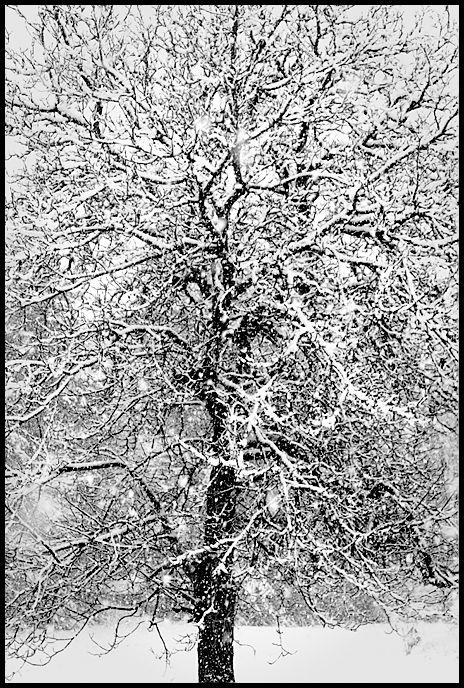 Blizzard Tree