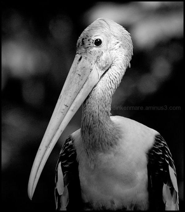 Stork - Jurong Bird Park, Singapore