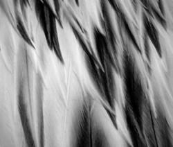 Feathers - Singapore Zoo, Singapore