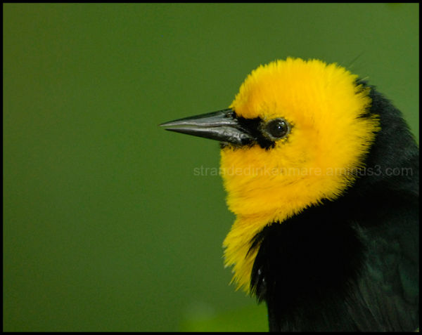 Songbird - Jurong Bird Park, Singapore