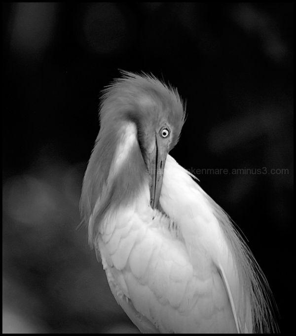 Preening - Jurong Bird Park, Singapore