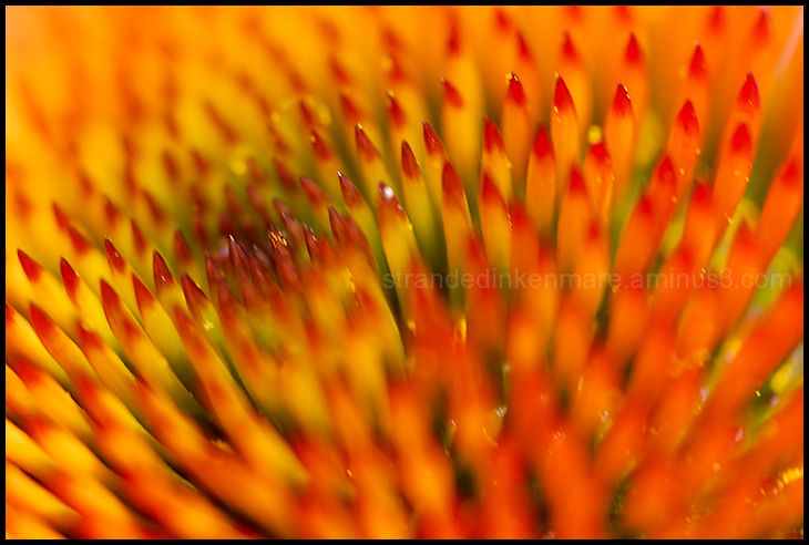 Pokey macro flowers color