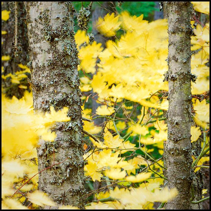 Haikus of Autumn #1