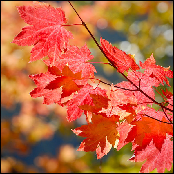 Haikus of Autumn #2
