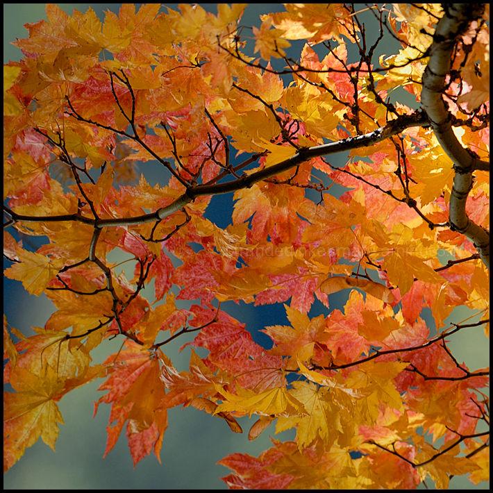 Haikus of Autumn #4