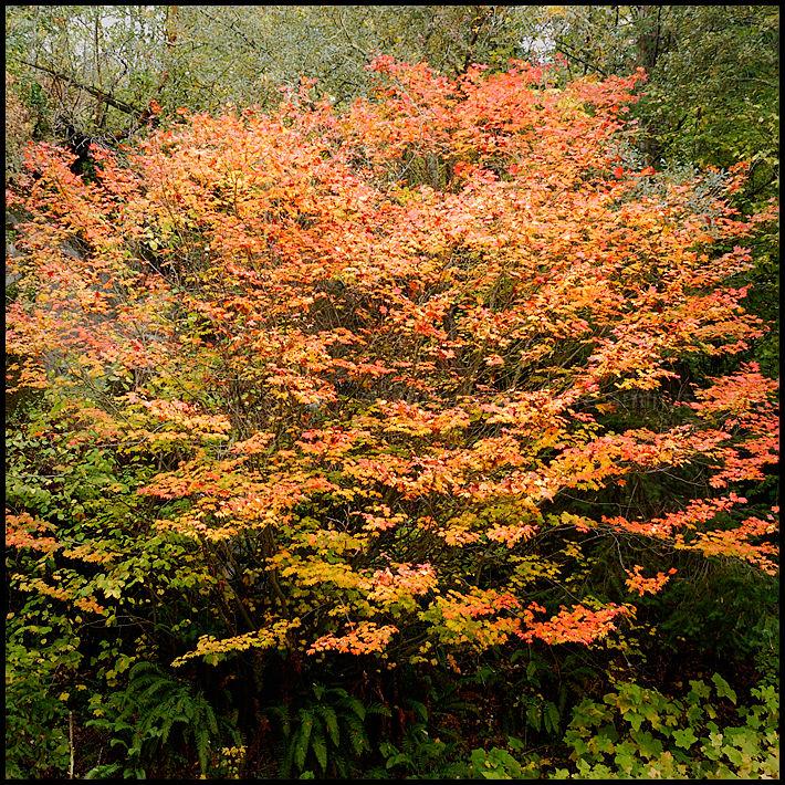 Haikus of Autumn #8