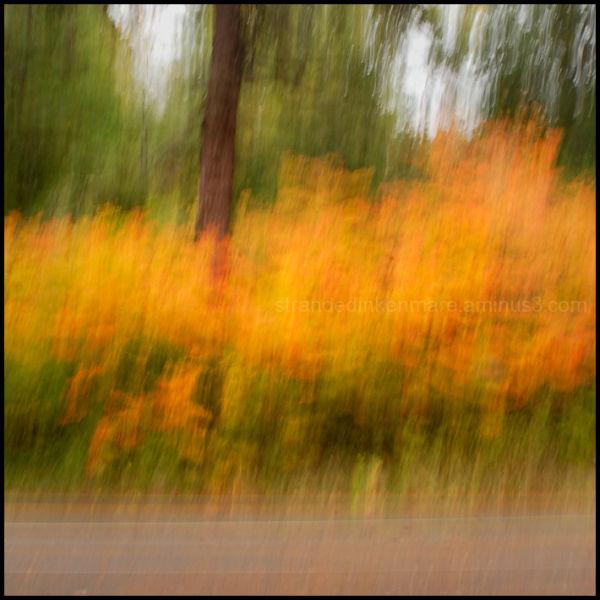 Haikus of Autumn #9