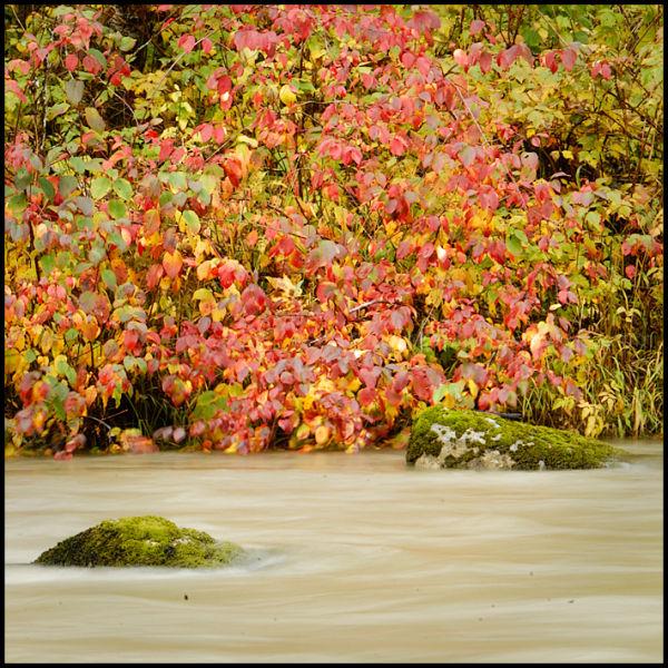 Haikus of Autumn #11