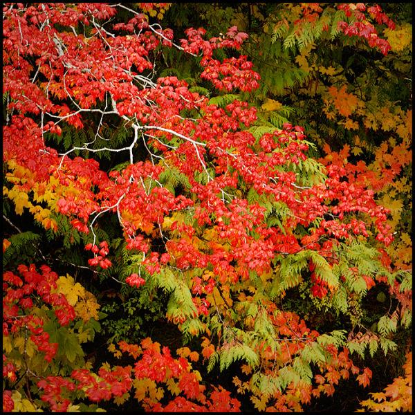 Haikus of Autumn #13