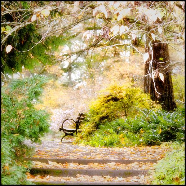 Haikus of Autumn #17