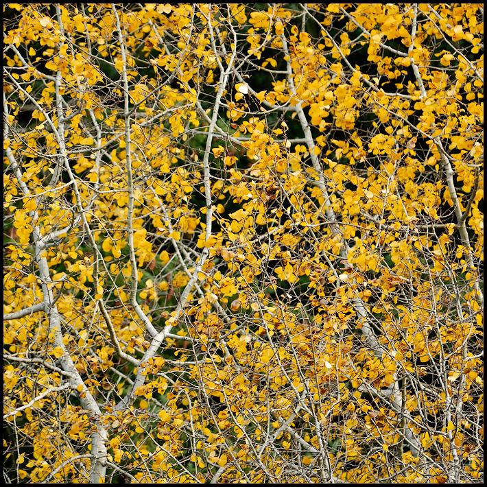 Haikus of Autumn #19