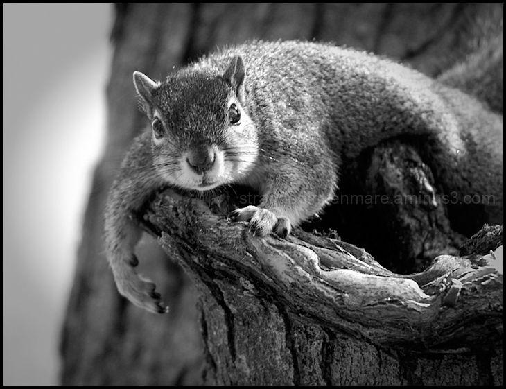 Lazy Day Squirrel