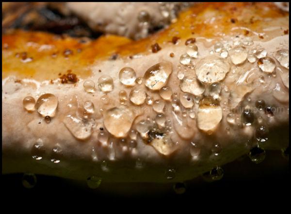 Fungus Detail