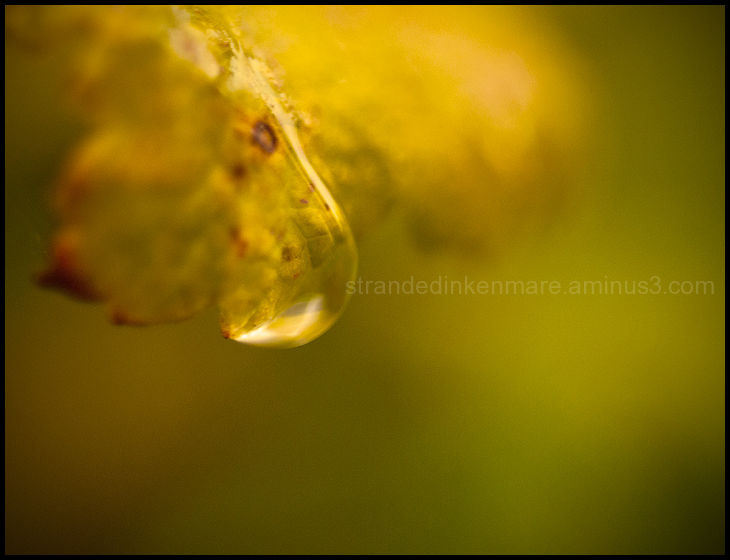 Golden Droplet