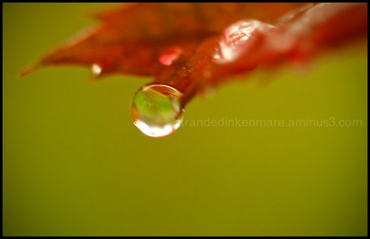 Hanging On Droplet