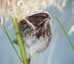 The Sparrow's Feast