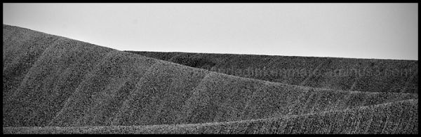 Palouse Abstract