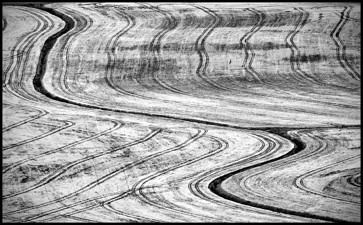 Wheat Field Patterns