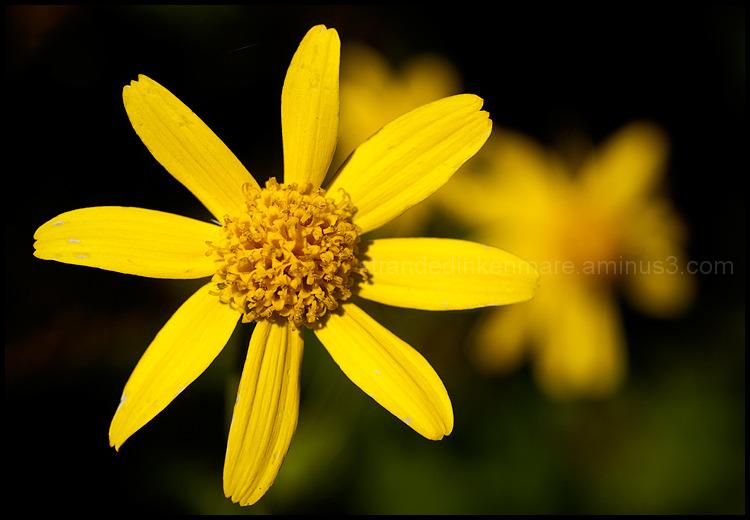 Autumnal Equinox: Wild Flower