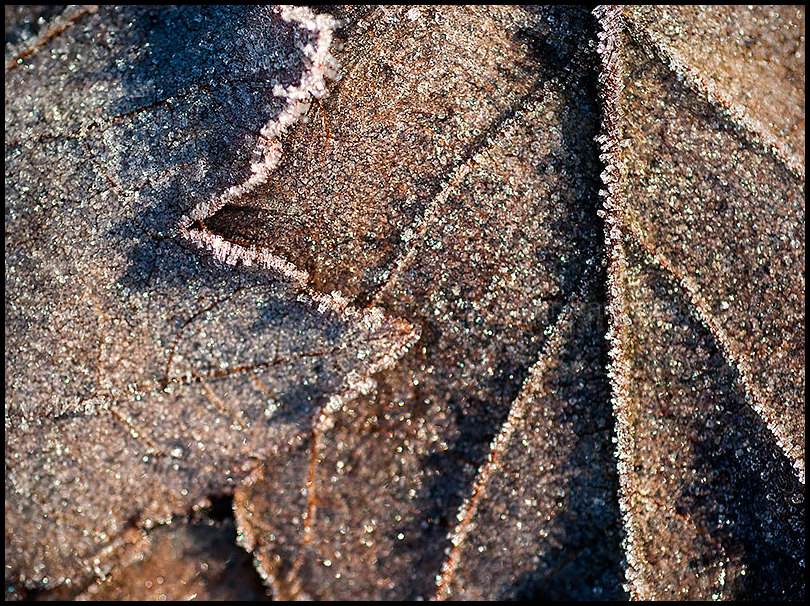 Signs of Winter