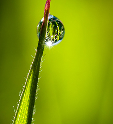 Droplet on Green