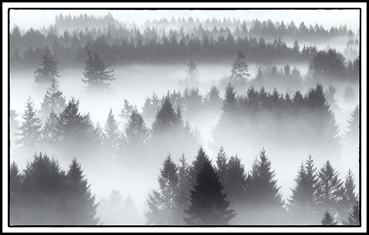 Rolling in Fog