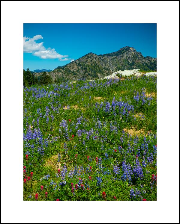 WK32-Colorful Landscape