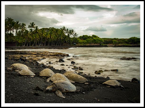 Big Island Adventure Punalu'u Black Sand Beach