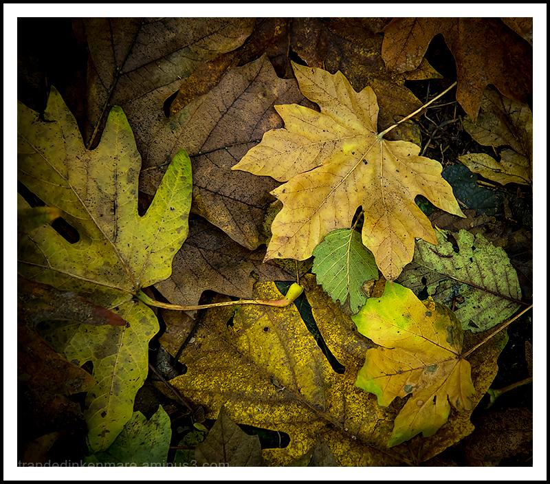 Fall-Scenes-#1