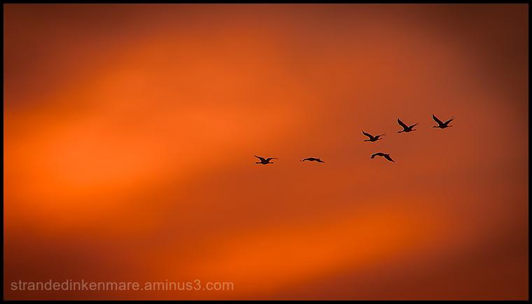 Sandhill Cranes Adventure3