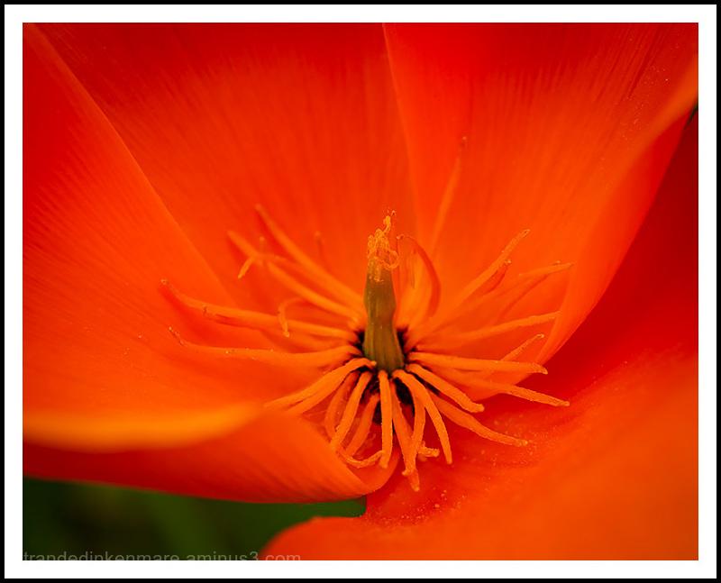The Three Colors Orange